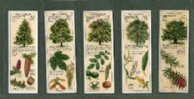 TRADE/ cigarette cards set Trees of the Countryside